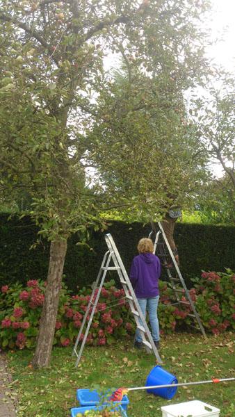 Appels-oogst